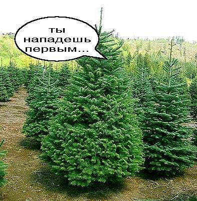 Янукович велел Азарову начать активно готовить елку к Новому году - Цензор.НЕТ 804